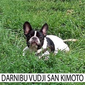 Darnibu2_z