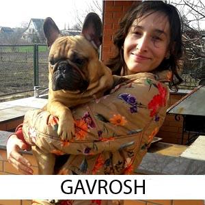 Gavrosh_z