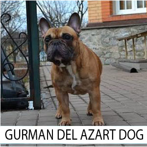 Gorman_ZAST