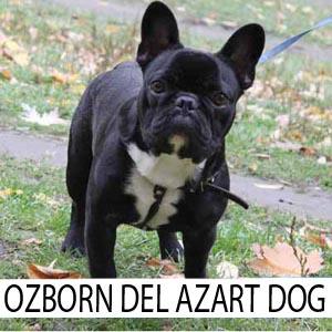 Oza_zast1