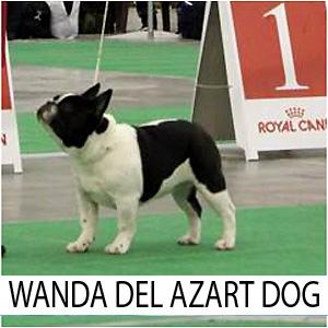 Wanda_z