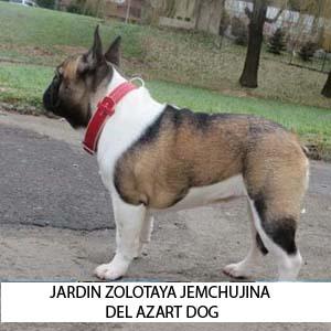 jARDIN_ZAST