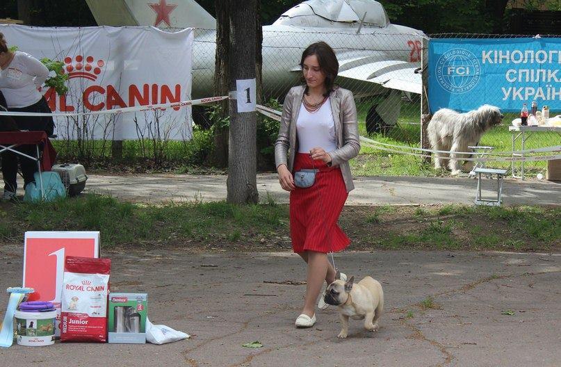 LUK DE BURBON DEL AZART DOG (3)
