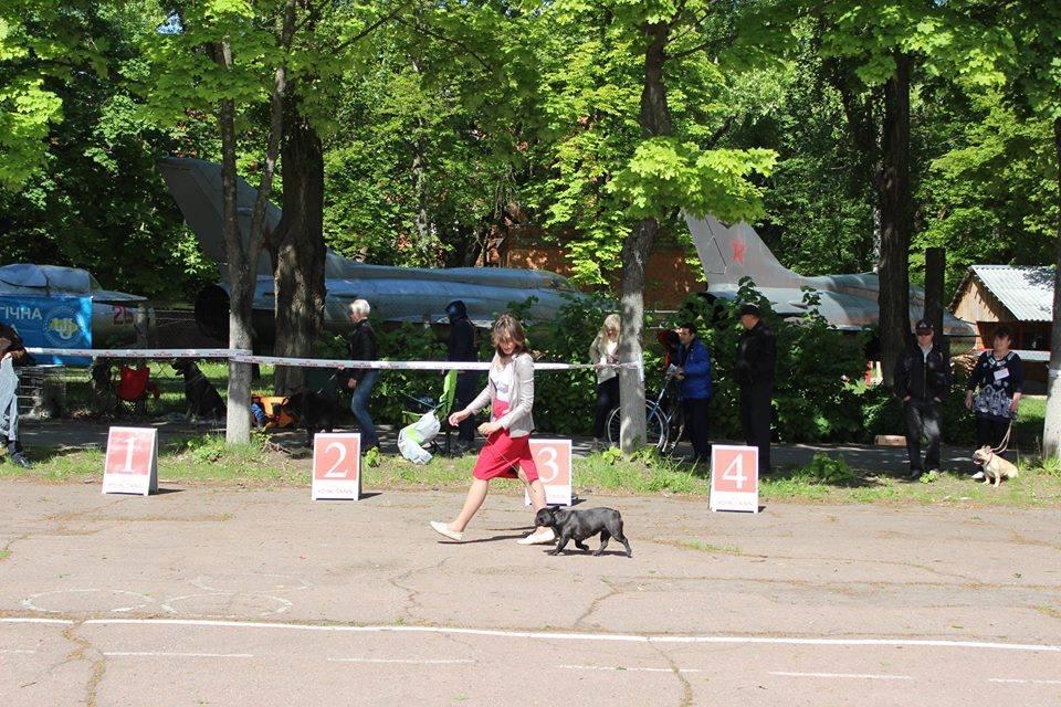 UVERTURA DEL AZART DOG (1)