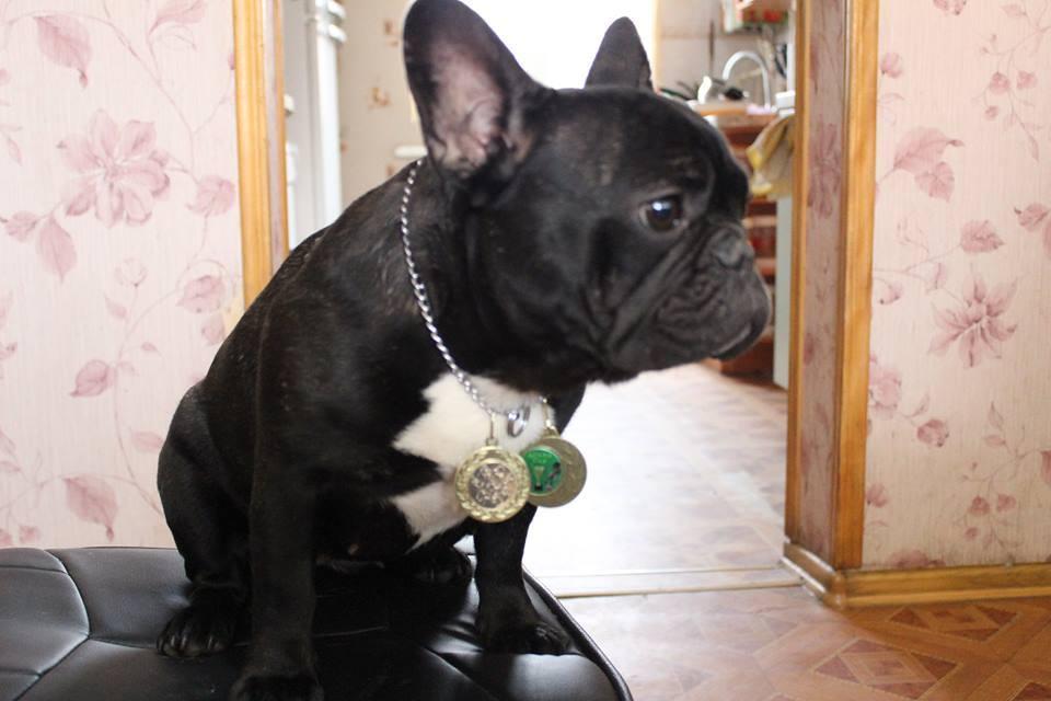 UVERTURA DEL AZART DOG (7)